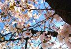 Auch du kannst erblühen - Haiku von Basho