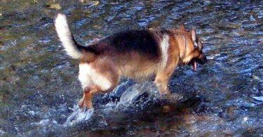 Ein Hund als Meister - eine Geschichte von Osho