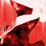 Für verletzte Herzen: Leiden ist eine wertvolle Energie