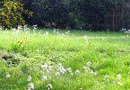 Natur spiegelt den Zustand von Meditation wider