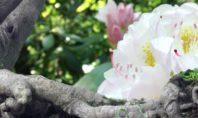 Therapie ist Vorbereitung zur Meditation