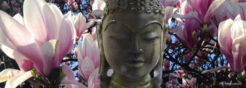 Selbsterforschung - der Weg in die Bewusstheit