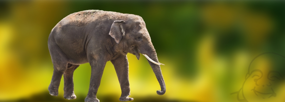 Buddhas Geschichte vom Elefant und den Blinden
