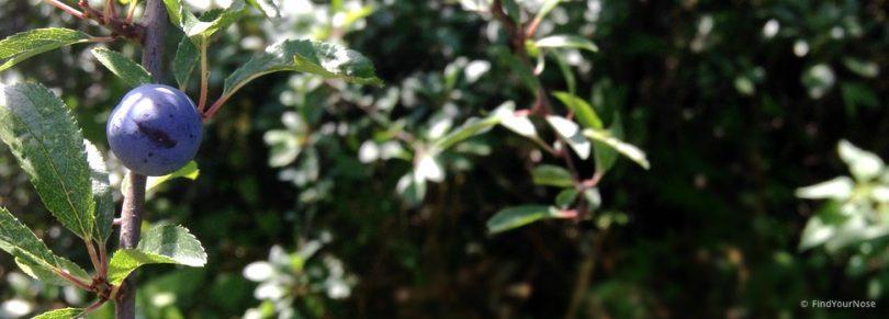 Freudig Lebewohl sagen - und sterben. Geschichte von Zenmeister Lin Chi
