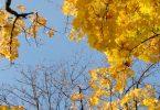Goldene Zeiten - Samarpans Blog