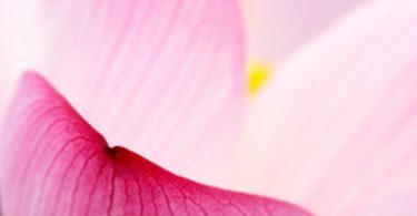 Teste deine Meditationserfahrung: Wie weit ist dein innerer Lotus erblüht?