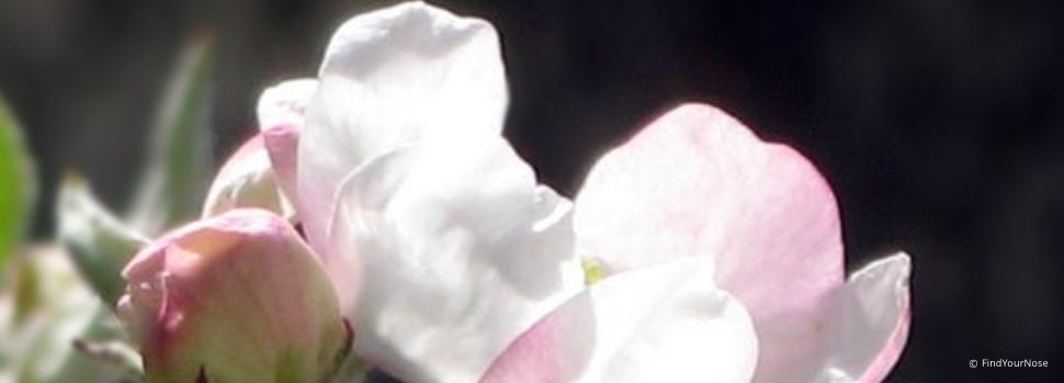 Ein Haiku von Basho - der Frühling wird kommen, auch für dich!