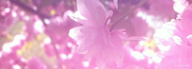 Ich liebe dich Schatz - Osho Zitat über die Liebe