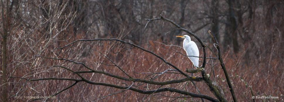 Was dir ein Fischreiher über Stille erzählen kann – ein Haiku von Basho