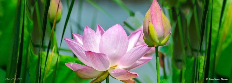 Ein meditativer Tipp für die Beziehung