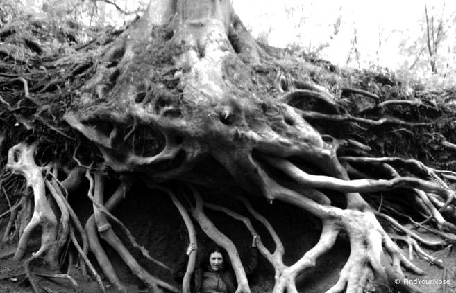 Psychoanalyse stutzt die Blätter des Problem-Baums, Spiritualität schneidet die Wurzeln