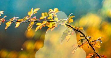 Dukkha (Leid) anerkennen – und feiern