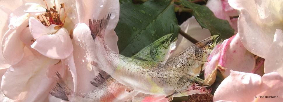 Fischgestank als Entspannungshilfe - über die destruktive Macht der Gewohnheit, eine Geschichte von Khalil Gibran