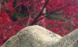 Bleibe bei den Tatsachen - eine tantrische Meditation