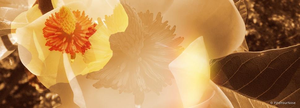 Mit Gewalt öffnet sich keine Blüte - entspanne.