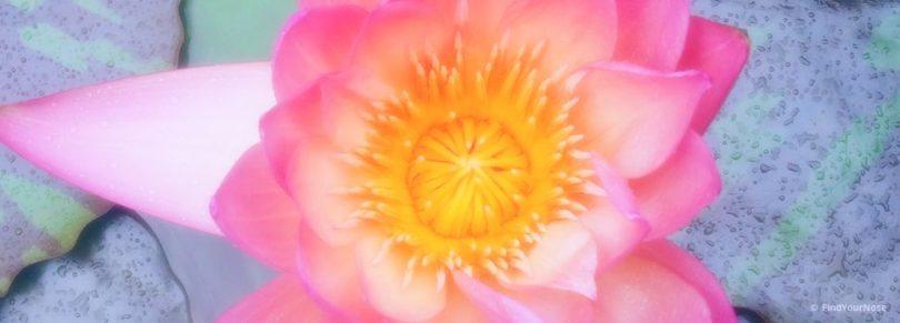 Meditation für herzorientierte Menschen - Der Lotus im Herzen