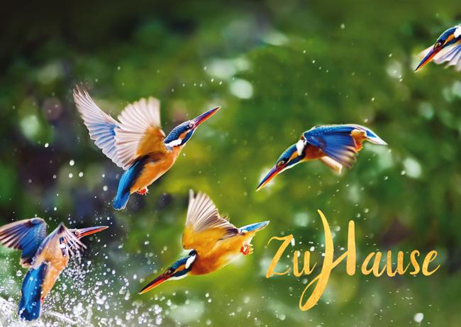 Meditative Grußkarte / Postkarte 'Zuhause, im Leben' – Vögel