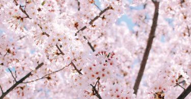 4 Meditationen für Sonn- und Feiertage