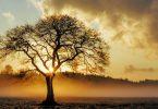 Über die begrenzte Wahrnehmung hinausgehen – eine Meditation