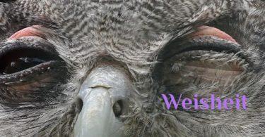 Wochenmeditation Weisheit