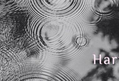 Harmonie lernen im FindYourNose Medi-Club - die Wochenmeditation