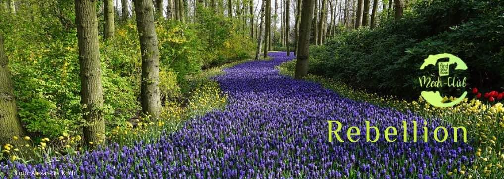 Wochenmeditation Rebellion: Folge deinem Herzen