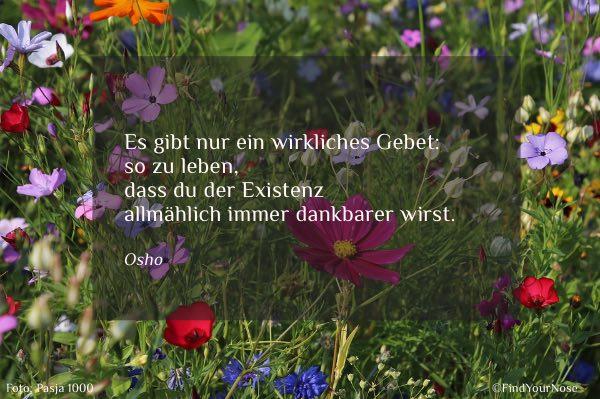 Osho Zitat über Dankbarkeit