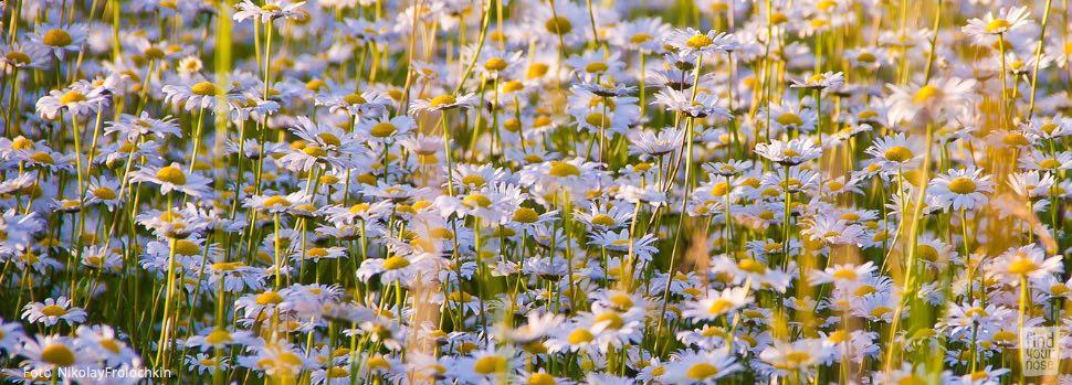 Weiße Samen säen